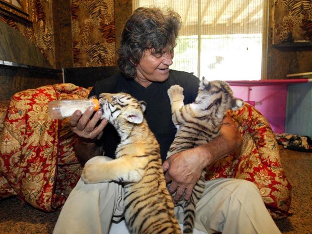 O ator Steve Sipek cuida de dois tigres em sua residência na Flórida, nos Estados Unidos (Foto: Bruce R. Bennett/AP)