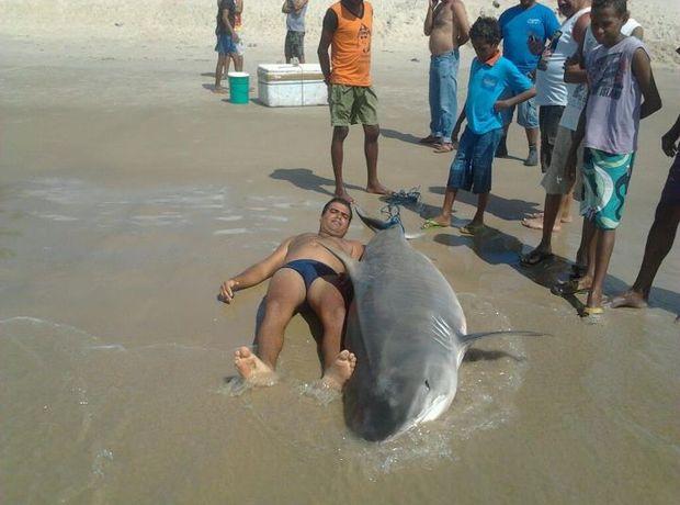Banhista atesta as dimensões do tubarão-tigre capturado no litoral Sul de Sergipe (Foto: Divulgação)