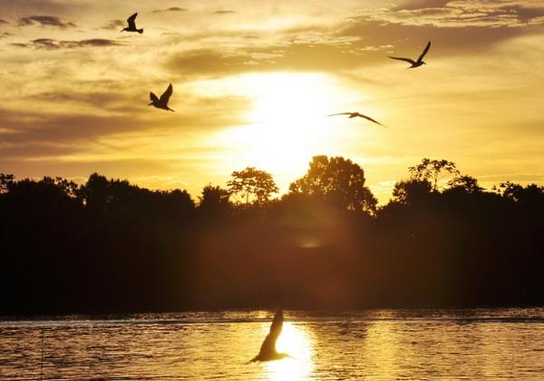 Pôr do sol realiza um espetáculo juntamente com as aves típicas da região do Rio Araguaia (Foto: Adhemar Gomes/Arquivo pessoal)
