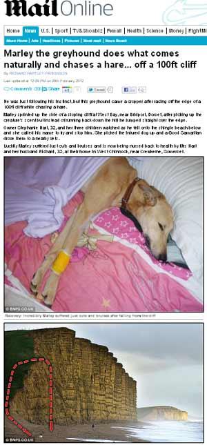 Reportagem do Daily Mail mostra foto de Marley ainda com curativo e o local da queda (Foto: Reprodução)