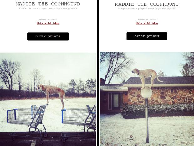 Maddie, a cadela da raça coonhound, é vista se equilibrando sobre um poste de luz e sobre carrinhos de supermercado (Foto: Reprodução/Maddieonthings)