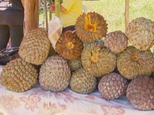 Vendedores de marolo terão que conseguir autorização para comércio. (Foto: Reprodução EPTV)