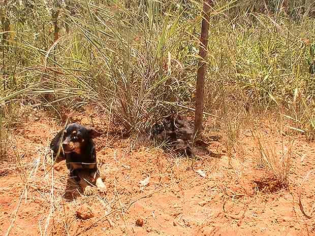 Cadela ao lado de corpo decomposto de cachorro morto em área do DER no Distrito Federal (Foto: Felipe Néri/G1)