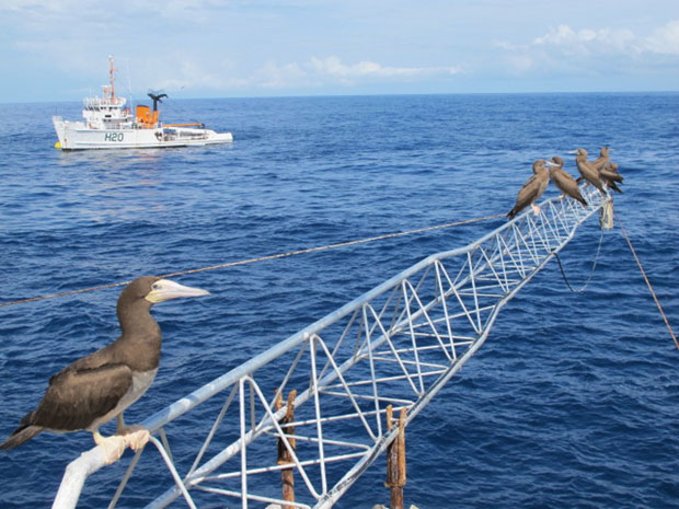 Marégrafo do Inpe mede variações do oceano e serve de apoio aos atobás (Foto: Eduardo Carvalho/Globo Natureza)
