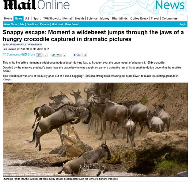 Gnu salta e escapa de ataque de crocodilo no Quênia. (Foto: Reprodução/Daily Mail)