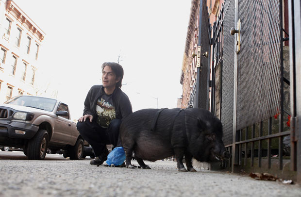Jason Loewenstein, dono do suíno, limpou suas necessidades como se ele fosse um cão (Foto: Lucas Jackson/Reuters)