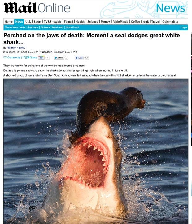 Tubarão saltou para capturar foca. (Foto: Reprodução/Daily Mail)
