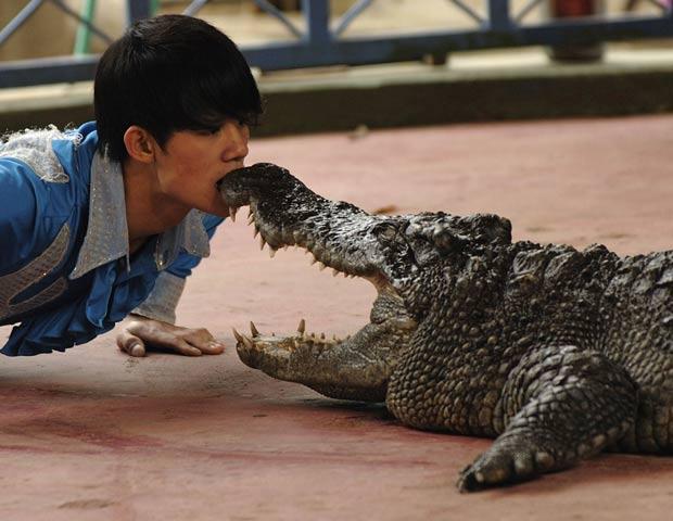 Homem põe boca perto de mandíbula de crocodilo. (Foto: Tuan DC/Reuters)