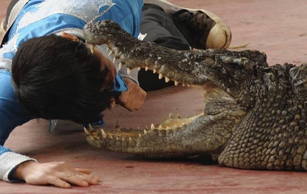Artista coloca a cabeça dentro da boca de um crocodilo. (Foto: Tuan DC/Reuters)