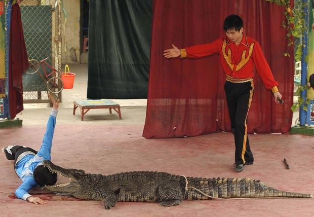 Apresentação ocorreu no zoológico de Hanói. (Foto: Tuan DC/Reuters)