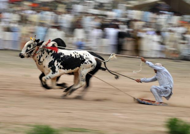 Corrida inusitada foi disputada na aldeia de Mari, no Paquistão. (Foto: Bay Ismoyo/AFP)