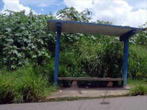 Matagal creceu nos arredores do ponto de ônibus, preocupando moradores do Jd. Paranapaema em Campinas, SP (Foto: Vita Celia Moraes / VC no G1)