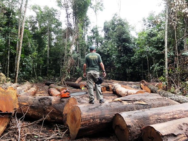 Exploração de madeira em Mato Grosso (Foto: Divulgação/Ibama)