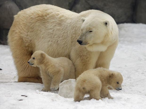 A mãe com os ursos (Foto: Alexander Zemlianichenko/AP)