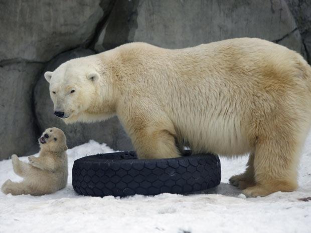 Filhotes de urso polar (Foto: Alexander Zemlianichenko/AP)