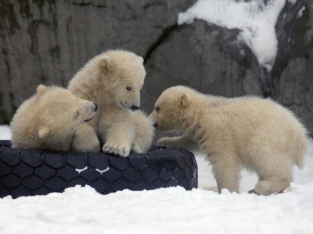 Ursos polares brincam em zoológico (Foto: Alexander Zemlianichenko/AP)