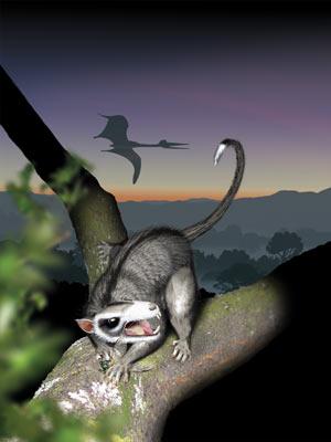 Multituberculado teria vivido durante período Mesozoico e convivido com dinossauros. (Foto: Divulgação / Jude Swales)