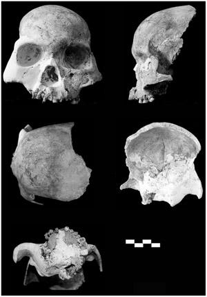 Restos humanos de mais de 11 mil anos atrás, encontrados na China (Foto: Divulgação/PLoS One)