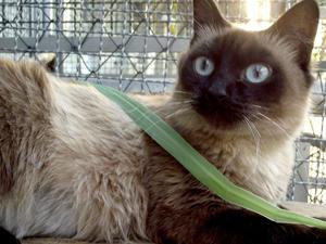 Gatos poderão ser adotados em feira (Foto: CCZ/ Divulgação)