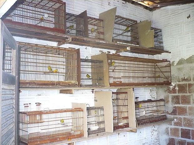 Ibama apreende aves em cativeiro na Paraíba (Foto: Divulgação/Ibama)