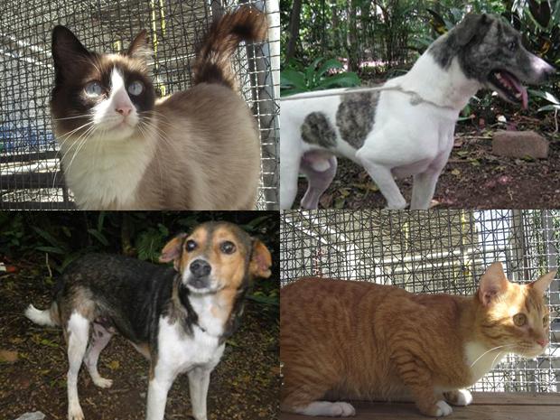 Cães e gatos estarão expostos durante feira de adoção do Centro de Controle de Zoonoses (Foto: CCZ/ Divulgação)