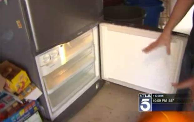 Urso devorou atum e almôndegas que estavam guardados na geladeira. (Foto: Reprodução)