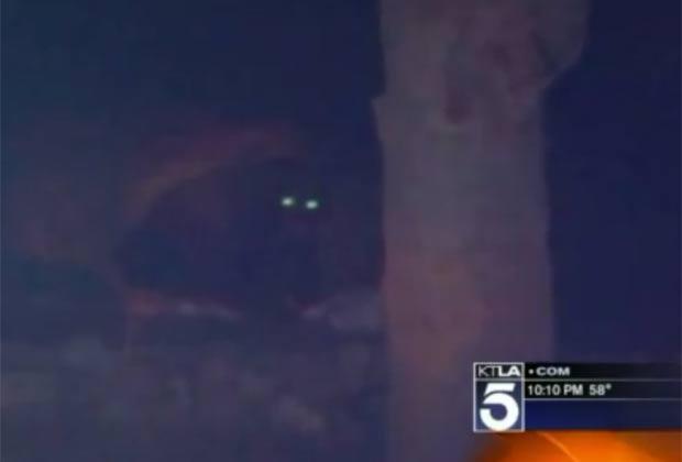 Urso invadiu garagem de casa em Glendale. (Foto: Reprodução)