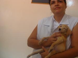 Médica veterinária afirma que as possibilidades da filhote voltar a andar são mínimas (Foto: Aliny Mary Dias/G1MS)