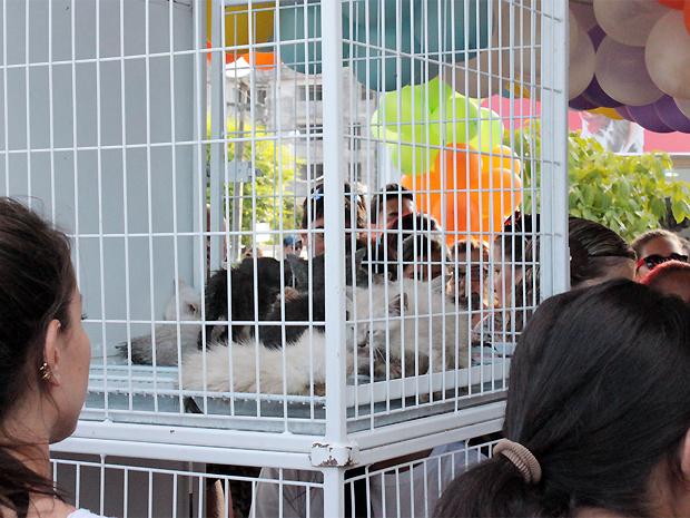 Filhotes de cães e gatos chamaram atenção de pessoas que passeava na Feirinha de Tambaú, em João Pessoa, na tarde deste sábado (17). Os bichinhos que estavam recolhidos no Centro de Zoonoses participaram da I Feira de Adoção do ano realizada pela prefeitu (Foto: Gabriela Marcolino/G1)