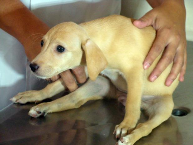 Polícia investiga agressão que deixou cadela paralítica em Campo Grande, MS (Foto: Aliny Mary Dias/G1MS)