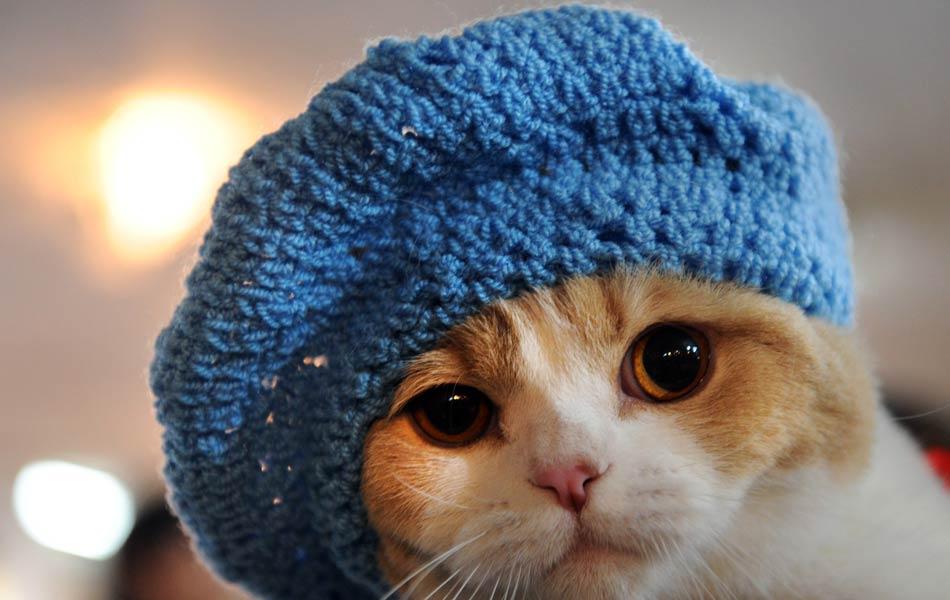 Gato com gorro feito à mão.
