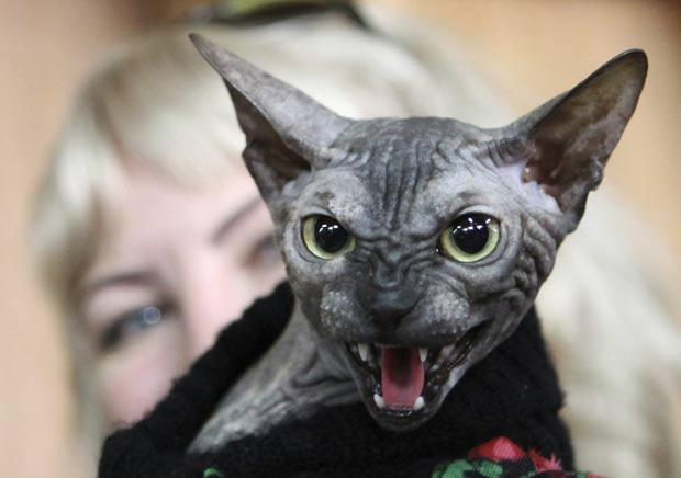 Um gato da raça 'Don Sphynx' fez uma cara assustadora ao ser fotografado no domingo (18) em uma feira em Bishke, no Quirguistão.  (Foto: Vladimir Pirogov/Reuters)