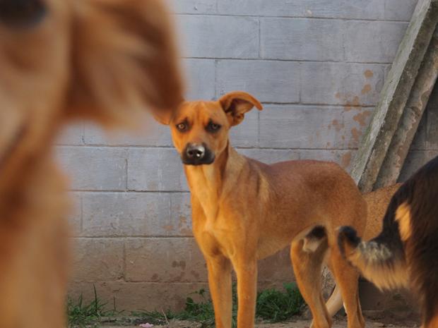 Cachorro (Foto: Fabiano Correia/G1)