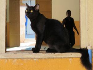 Gato que vive na associação 'posa' para foto (Foto: Fabiano Correia/G1)