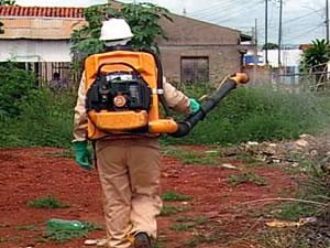 combate à dengue (Foto: Reprodução/TVCA)