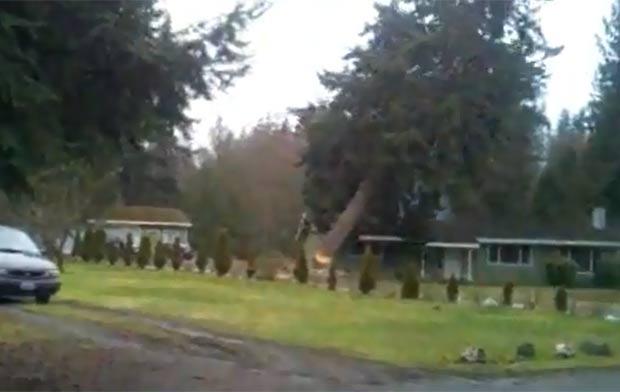 Árvore pendeu justamente para o lado da casa.  (Foto: Reprodução/YouTube)