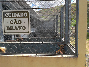 Cães que vivem no Centro de Zoonoses de Araraquara (SP) (Foto: Manoela Marques/G1)