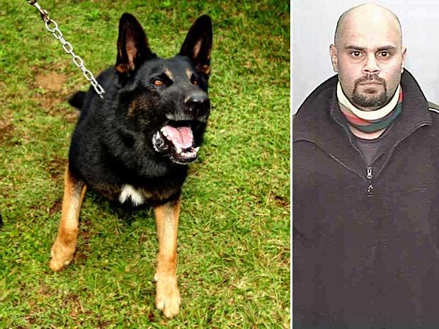 """Um cão policial chamado """"Chuck"""" ajudou na captura do fugitivo Malcolm Naden, que segundo a polícia é o criminoso mais procurado da Austrália.  (Foto: AP Photo)"""