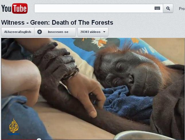 """Imagem mostra a orangotango """"Green"""" recebendo cuidados de veterinário em parque da Indonésia. (Foto: Reprodução/YouTube)"""