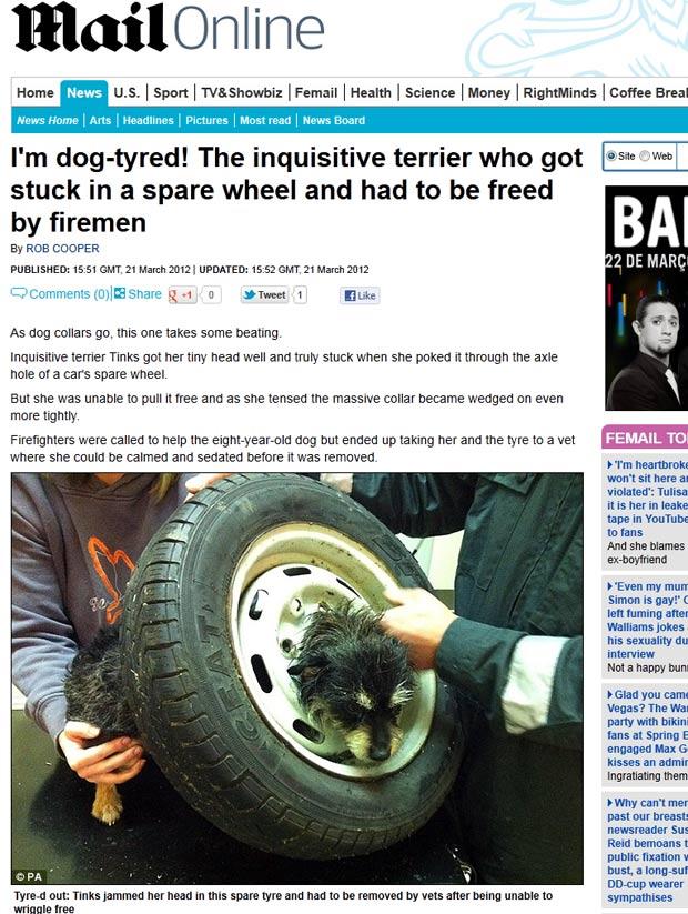 Cadela foi encontrada com a cabeça entalada em uma roda. (Foto: Reprodução/Daily Mail)