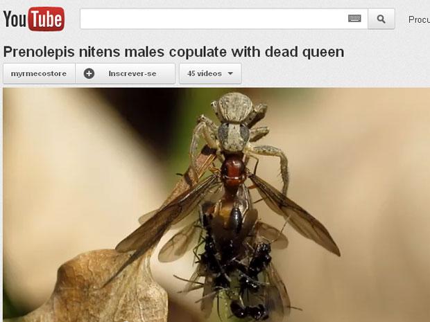 Biólogo registrou abelhas acasalando com uma rainha enquanto ela virava refeição de uma aranha (Foto: Reprodução / YouTube)