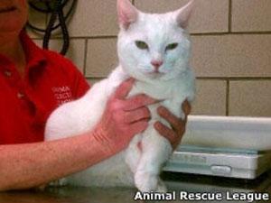 Veterinário diz acreditar que a gata sobreviveu ao abrir as patas como se fossem asas (Foto: Animal Rescue League Boston)