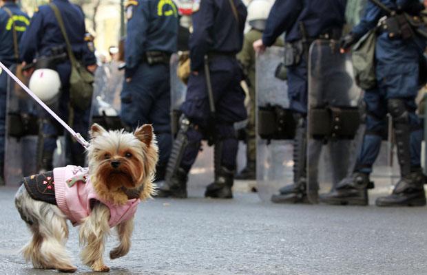 Cão é fotografado em frente a guarda da polícia no Dia da Independência, em Atenas (Foto: John Kolesidis/Reuters)