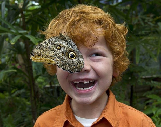 Mac Jarman parecia ter um olho postiço após borboleta coruja pousar sobre seu rosto. (Foto: Ken Bohn/San Diego Zoo/AP)