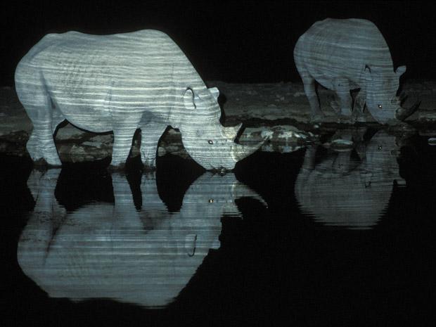 Rinocerontes pretos, uma espécie ameaçada de extinção, são criaturas solitárias, segundo o fotógrafo sul-africano Wynand du Plessis. Mas na Namíbia, ele encontrou vários rinocerontes do tipo que se relacionavam bem entre si e com outros animais.  (Foto: Wynand du Plessis)