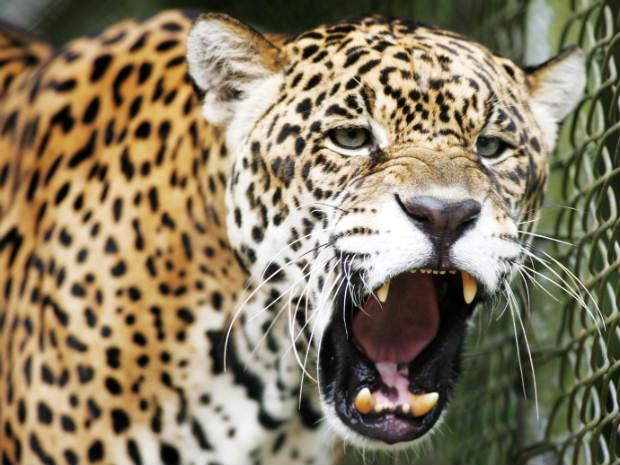 festa jardim zoologico:G1 – Zoológico de Curitiba comemora 30 anos nesta quarta-feira