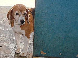 O cão Gabriel antes de ser sacrificado no Centro de Zoonoses de Araraquara (Foto: Divulgação/Arquivo pessoal)