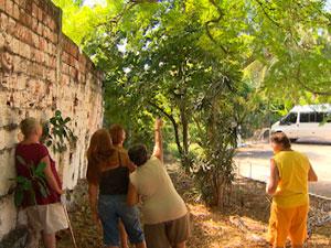 Moradores se assustam com cobra encontrada no Stiep, em Salvador (Foto: Imagens/ TVBA)