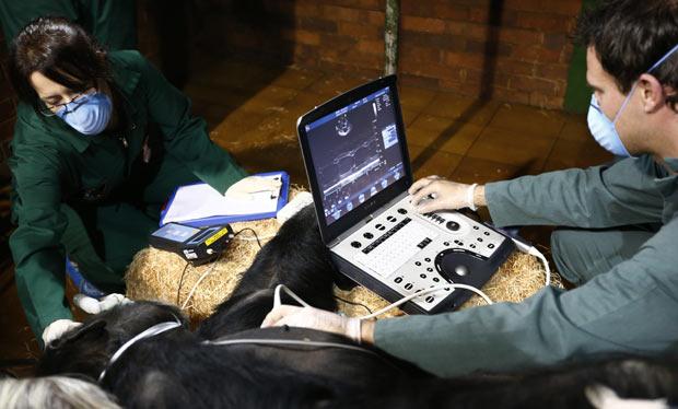 Uma equipe de veterinaries realizou nesta segunda-feira (26) exame de ultrassom cardiológico no chimpanzé Dylan, que vive no Chester Zoo, em Liverpool, na Inglaterra. Os testes fazem parte de um programa internacional que verifica as condições do coração de grandes macacos. (Foto: Phil Noble/Reuters)