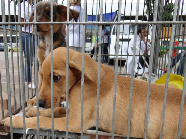 Animais estarão disponíveis para adoção na quinta (Foto: Divulgação/Sepda )